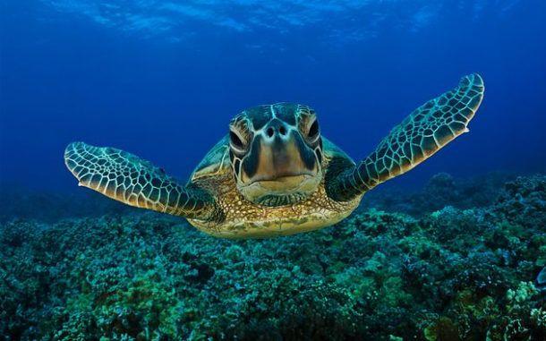 Monitoramento identifica presença de tartarugas no canal do porto